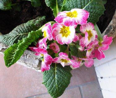 FOTKA - v jarním květináči