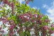 Kouzelné jarní květy