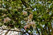 Jarní květy na větvi