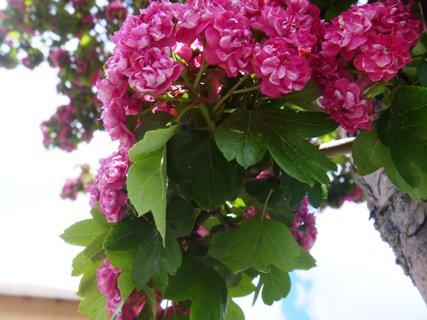 FOTKA - květy na stromku
