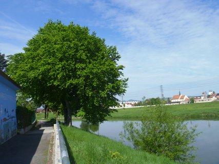 FOTKA - na břehu řeky Moravy v UH