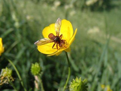 FOTKA - prílet na kvet