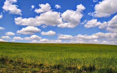 FOTKA - Mráčky na polem s rostoucím obilím