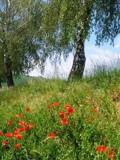 FOTKA - květnová příroda