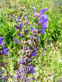 FOTKA - fialovo v trávě
