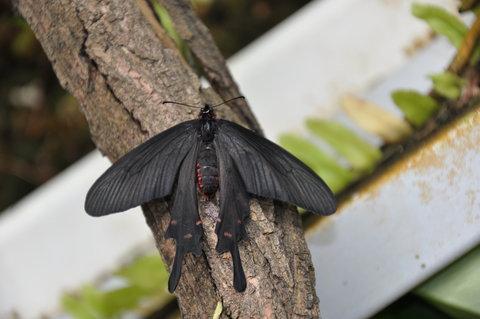 FOTKA - Motýl na stromě