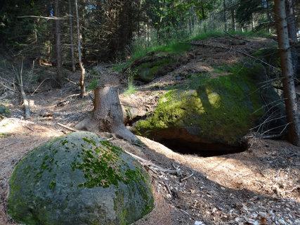 FOTKA - ..kousek lesa..