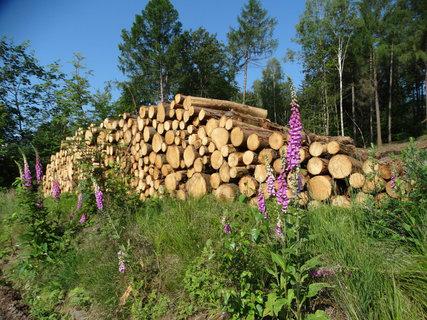 FOTKA - dřevo a náprstníky