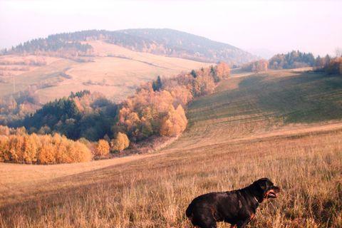 FOTKA - Naše Roxy  na procházce /Javornik/.