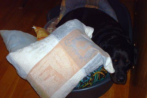 FOTKA - Roxy - rottweilerka v polštařích.