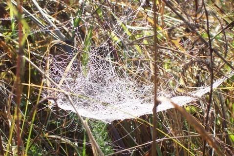 FOTKA - Orosená pavučinka