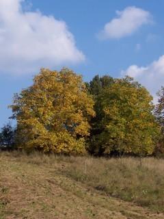 FOTKA - Podzimní krajina