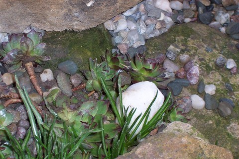 FOTKA - Bílý  kamínek