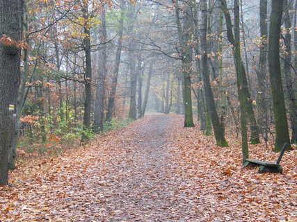 FOTKA - Podzimní cesta s lavičkou