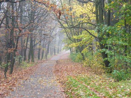 FOTKA - Nekonečná podzimní cesta