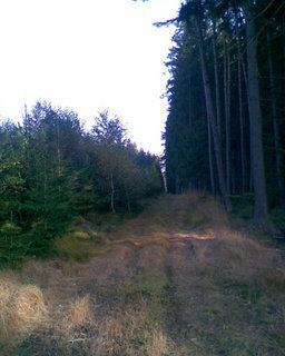 FOTKA - Lesní cesta