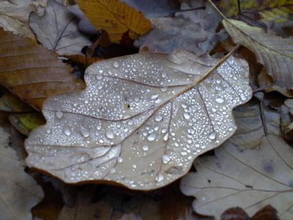FOTKA - List s perličkami