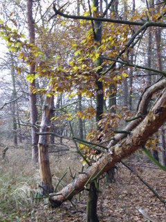 FOTKA - Podzim v lese.
