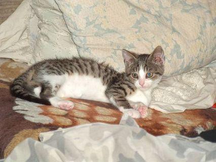 FOTKA - Cica