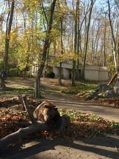 FOTKA - Medvědi a podzim