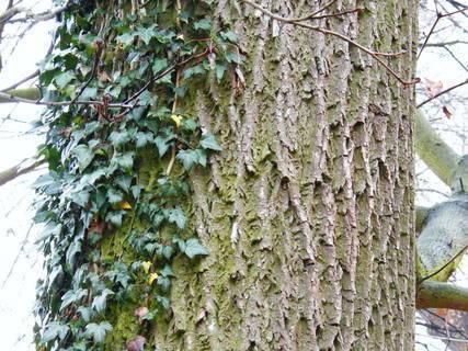 FOTKA - kmen stromu