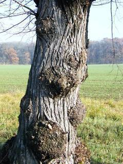 FOTKA - kmen stromu..