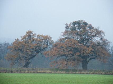 FOTKA - Stromy s podzimním listím
