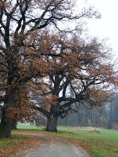 FOTKA - Stromy ve Veltrusech