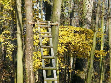 FOTKA - Žebřík a podzimní stromy