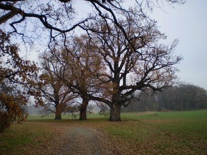 FOTKA - Stromy padá listí