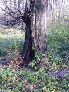 FOTKA - Kmen stromu.....