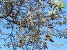 Jaro, léto, podzim - vše v jeden okamžik