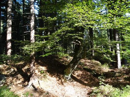FOTKA - toulky lesem