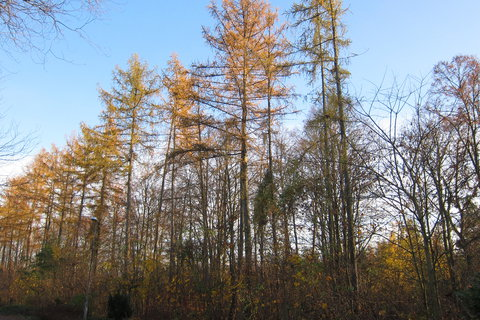 FOTKA - Ekocentrum Prales Kbely - dnes