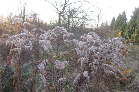FOTKA - Ekocentrum Prales Kbely - podzim