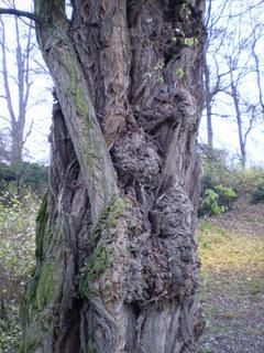 FOTKA - Kmen stromu....