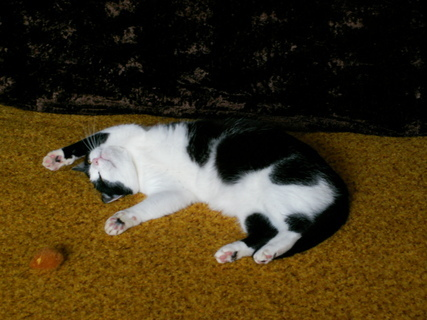 FOTKA - Kočička.