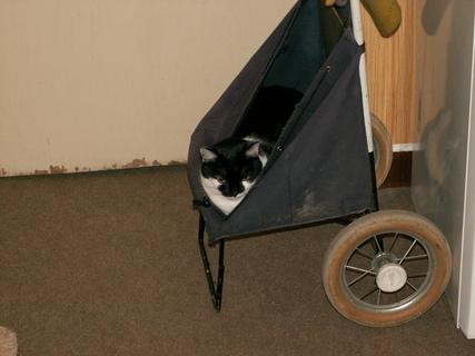 FOTKA - Kočička2