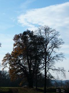 FOTKA - Stromy na podzim