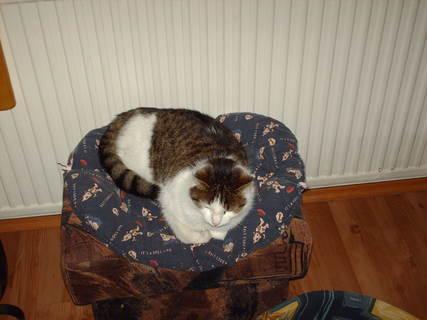 FOTKA - Náše kočička Nelly /oblibené misto w zimě/