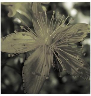 FOTKA - příroda 2008