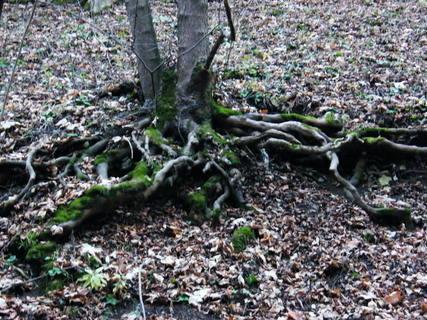 FOTKA - Kořen