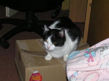 FOTKA - Na krabici