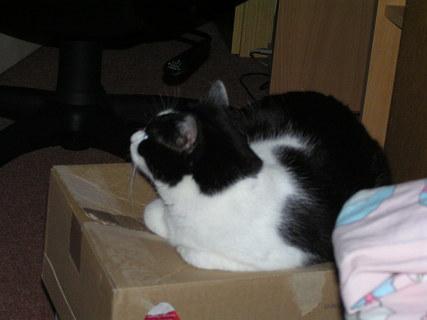 FOTKA - Na krabici 2