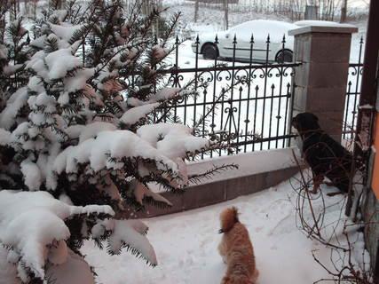 FOTKA - Roxy - první sníh /22.11.2008/