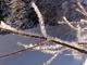 kouzlo zimy (namrzlá větvička)