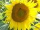 Život na slunečnici