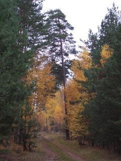 FOTKA - Podzim v lese II