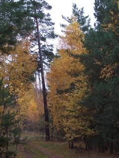 FOTKA - Podzim v lese III