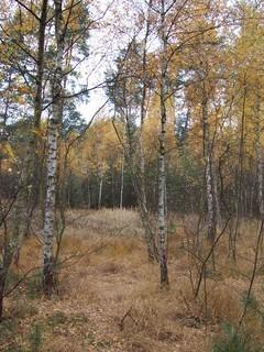 FOTKA - Podzim v lese IV